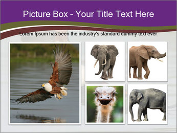 0000061180 PowerPoint Template - Slide 19