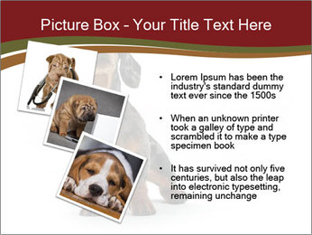 0000061205 PowerPoint Template - Slide 17