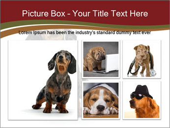 0000061205 PowerPoint Template - Slide 19