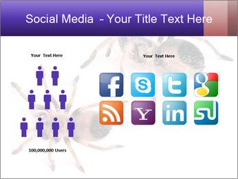 0000061418 PowerPoint Template - Slide 5