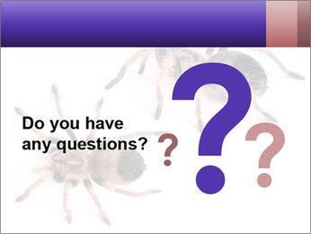 0000061418 PowerPoint Template - Slide 96
