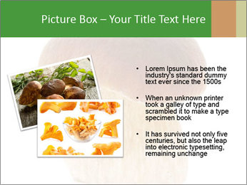 0000061568 PowerPoint Template - Slide 20