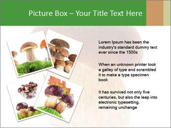 0000061568 PowerPoint Template - Slide 23