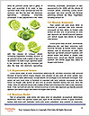 0000061573 Word Templates - Page 4