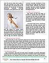 0000061577 Word Templates - Page 4