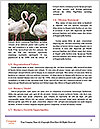 0000061759 Word Template - Page 4