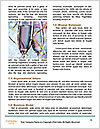 0000061822 Word Template - Page 4