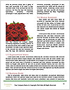 0000061962 Word Templates - Page 4