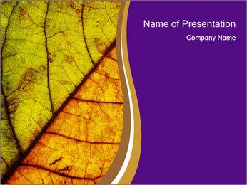 0000061972 PowerPoint Template - Slide 1