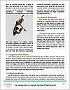 0000061981 Word Templates - Page 4