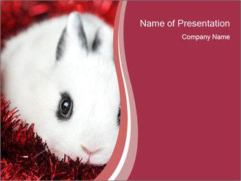 0000062116 PowerPoint Template - Slide 1