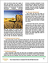 0000062142 Word Template - Page 4