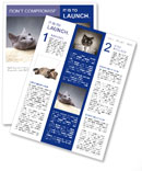0000062143 Newsletter Templates