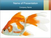 0000062184 PowerPoint Templates