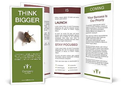0000062193 Brochure Templates