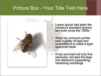 0000062193 PowerPoint Templates - Slide 13