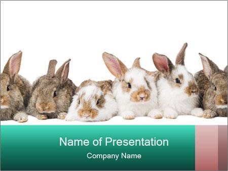 0000062277 PowerPoint Templates