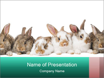 0000062277 PowerPoint Templates - Slide 1