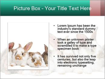 0000062277 PowerPoint Templates - Slide 13