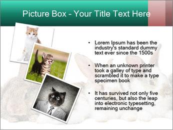 0000062277 PowerPoint Templates - Slide 17