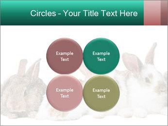 0000062277 PowerPoint Templates - Slide 38