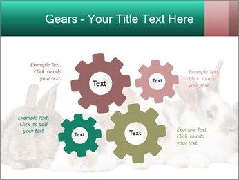 0000062277 PowerPoint Templates - Slide 47