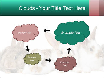 0000062277 PowerPoint Templates - Slide 72