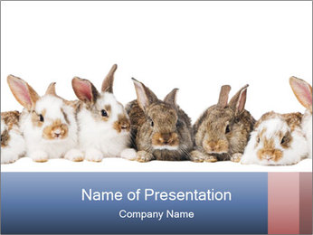 0000062278 PowerPoint Templates - Slide 1