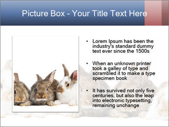 0000062278 PowerPoint Templates - Slide 13