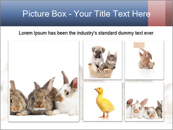 0000062278 PowerPoint Templates - Slide 19