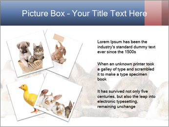 0000062278 PowerPoint Templates - Slide 23