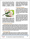 0000062300 Word Templates - Page 4