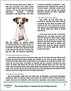 0000062313 Word Template - Page 4