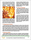 0000062375 Word Template - Page 4