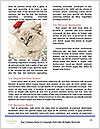 0000062397 Word Template - Page 4