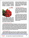 0000062418 Word Template - Page 4