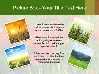 0000062498 PowerPoint Template - Slide 24