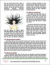 0000062539 Word Templates - Page 4