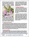 0000062555 Word Templates - Page 4