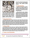 0000062571 Word Template - Page 4