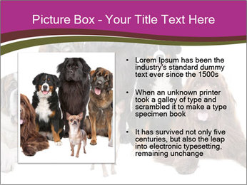 0000062574 PowerPoint Template - Slide 13