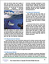 0000062645 Word Template - Page 4