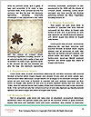 0000062684 Word Template - Page 4