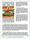0000062691 Word Template - Page 4