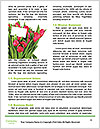 0000062877 Word Templates - Page 4