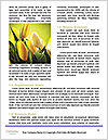 0000062887 Word Template - Page 4