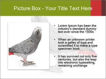 0000063059 PowerPoint Template - Slide 13