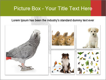 0000063059 PowerPoint Template - Slide 19