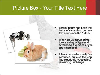 0000063059 PowerPoint Template - Slide 20