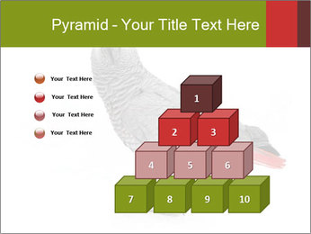 0000063059 PowerPoint Template - Slide 31
